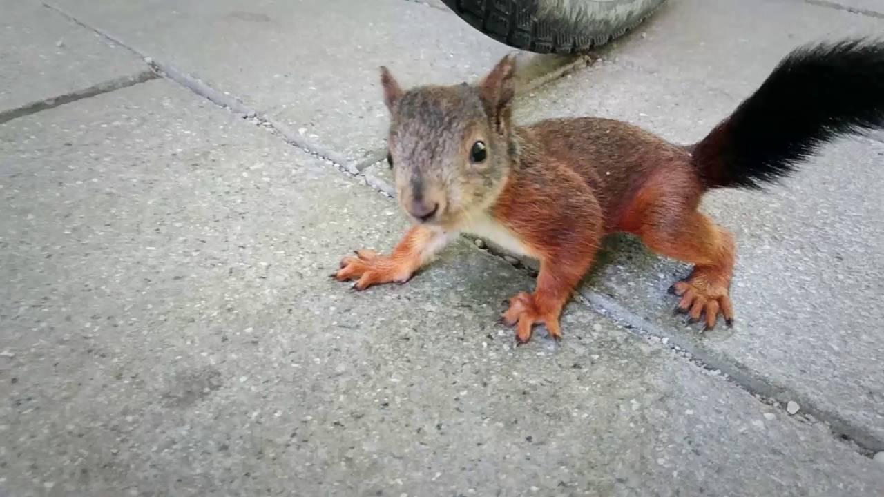 cute baby squirrel res...