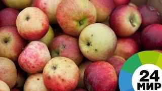 видео Строительство фруктохранилищ
