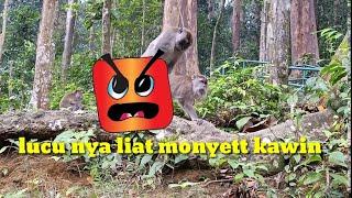 Download Mp3 Liat Monyet Di Hutan