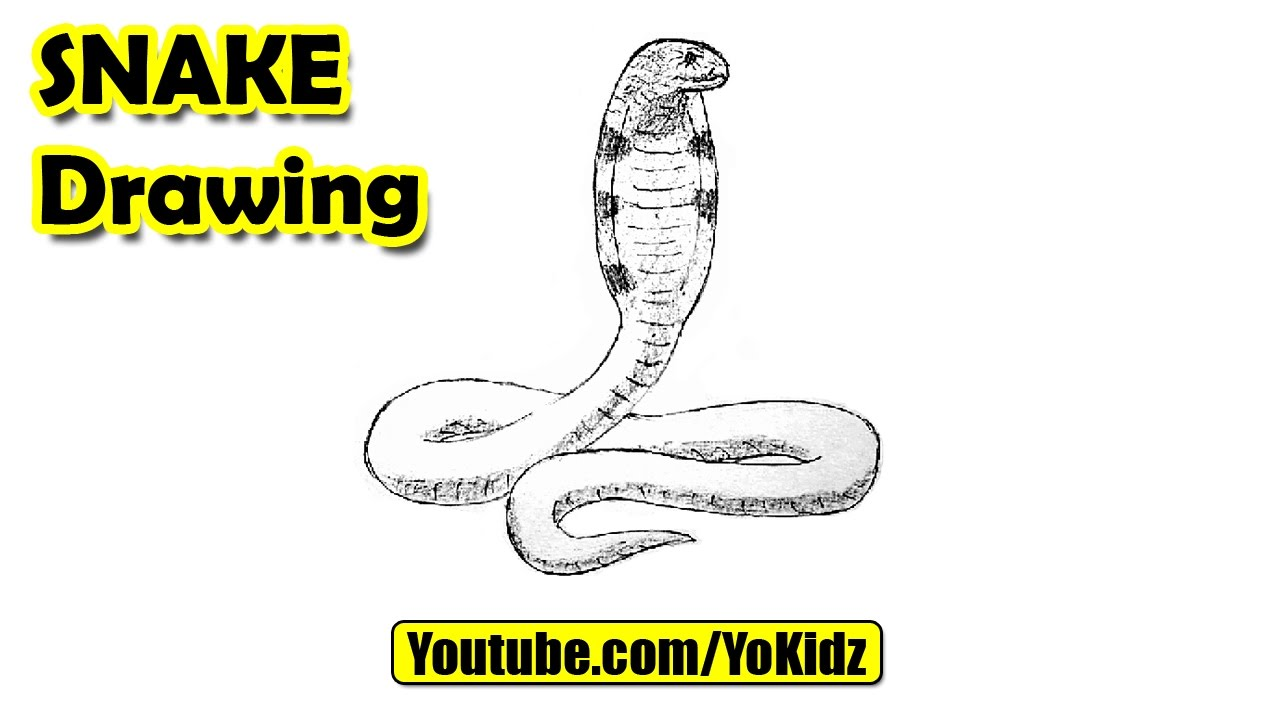 How To Draw A Snake Youtube