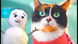 Wir schenken 1400 € für einen Schneemann CHALLENGE