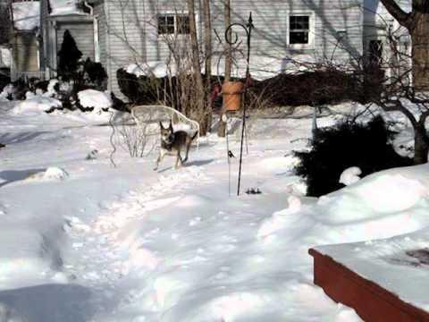Corby Snow Pile Dive 02 10 07