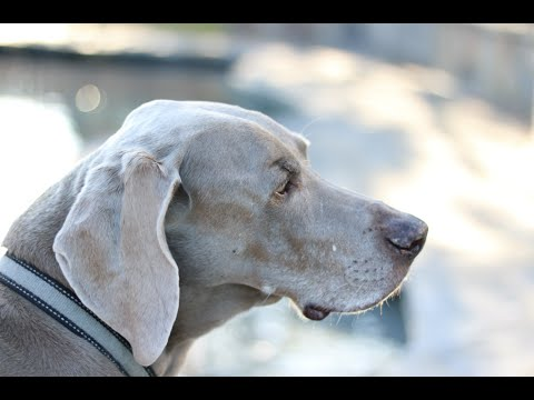 A Tribute To Bosley | MsGoldgirl