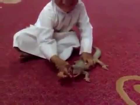 niño le pega a lagartija y este le muerde no se pierda el final!