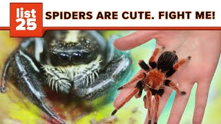 25 Most Bizarre Spiders