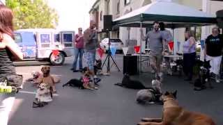 Cali K9® Celebrates Six Years Of Happy Dogs - Bay Area Dog Training