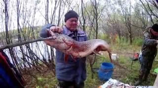 Кривецкая старица  Рыбалка