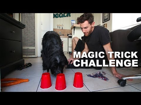 MAGIC TRICK CHALLENGE for your DOG!