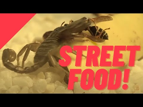 Exotic And Popular Street Foods You'll Find In Asia | FACTS.