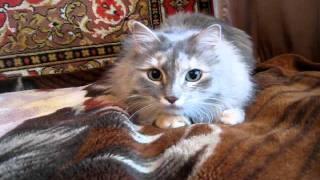 хорек и кошки