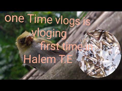 One time Vlogs/vloging