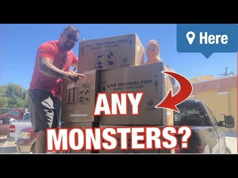 *UNBOXING* LIVE TROPICAL FISH!! From The AMAZON