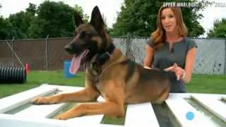 Police K9 Dog saves partner