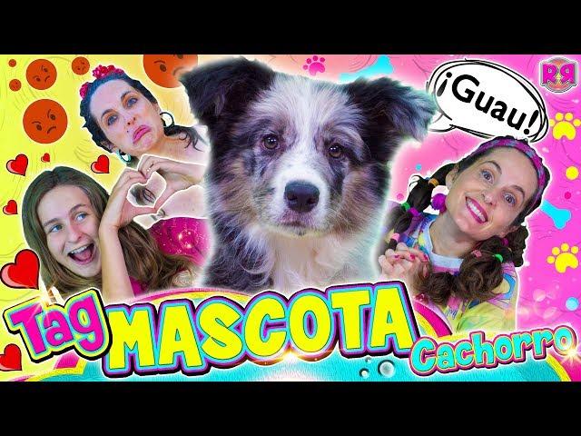 TAG de la MASCOTA CACHORRO 🐶 Cosas sobre mi perro 💖 🐺 Vídeo de risa divertido de perros cachorros