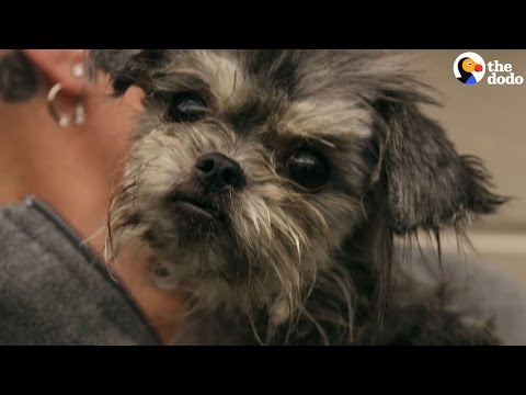 Rescue Dog Gets The Care She Needs — And A Haircut, Too