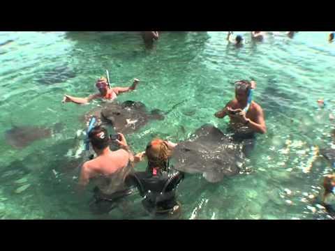 Bora_Bora_Shark-Ray Tour.mkv