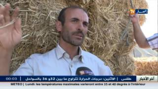 فلاحة : انهيار أسعار الأعلاف.. سبب تراجع اسعار أضاحي العيد