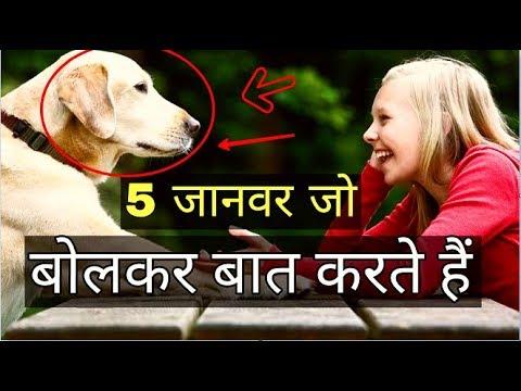 Top 5 Animals Who Can Talk |  बोलने वाले जानवर ?