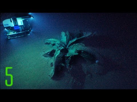 5 Deep Sea Anomalies That Can't Be Explained