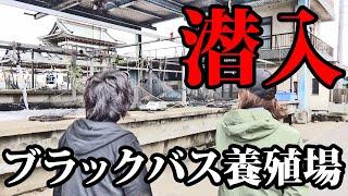【激震】ブラックバス養殖業者に潜入【外来魚】