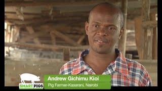 Pig farming success story and tips - Kasarani Urban farmer Part 1