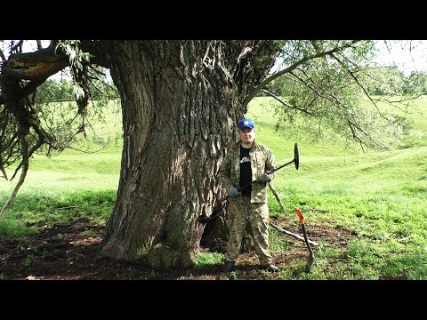 Нас ждали деревья гиганты и приятные сюрпризы на копе