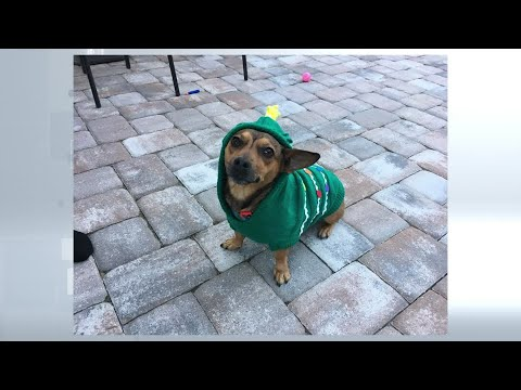 Tampa Bay area pets bundle up for the cold weather