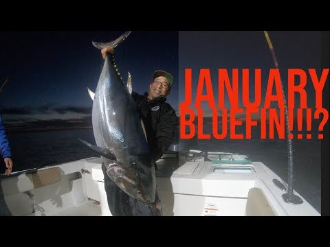 January Bluefin Tuna Fishing In California!  Big Tuna Dreams 2019 Part 1