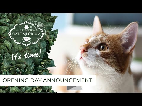 Me-wow! London Is Getting Its Very Own Cat Café