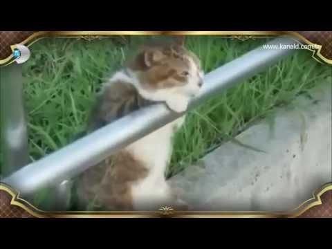 Beyaz Show-Sevimli hayvanlar Hakan Altun'un kliplerinde oynarsa