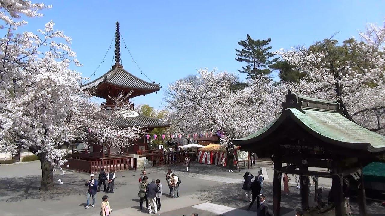 喜多院の桜 埼玉県川越市 2014/04/01 - YouTube