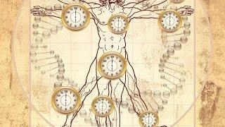 Ткани и органы человека(, 2015-03-21T13:30:37.000Z)