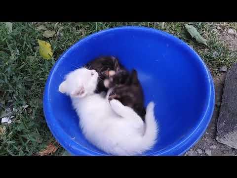 Черный и белый котята играют в тазу