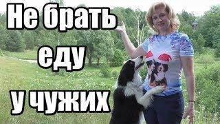 Как научить собаку не брать еду из чужих рук / Дрессировка собак