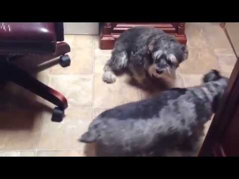 Funny Guilty Dogs Compilation!!!
