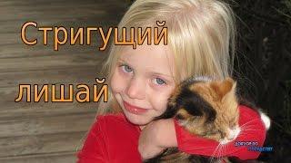 СТРИГУЩИЙ ЛИШАЙ / RINGWORM