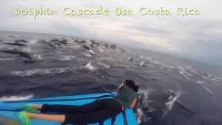 Dolphin Cascade Costa Rica Cascada Delfines Osa