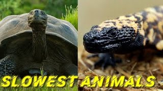 Top 10 // Slowest Animals // In The World