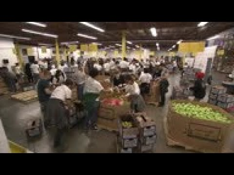 Robert Trujillo of Metallica joins the band's fans at food bank