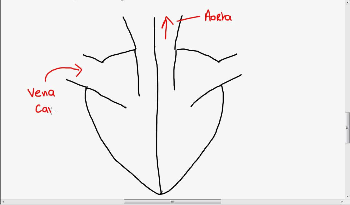structure of the heart youtube rh youtube com easy to understand heart diagram very easy heart diagram