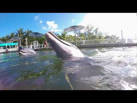 Dolphins Plus Bayside | Key Largo, FL