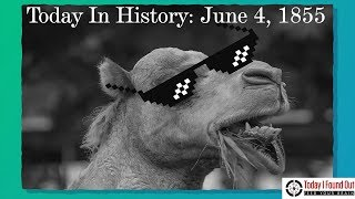 June 4, 1855: The Camel Corps