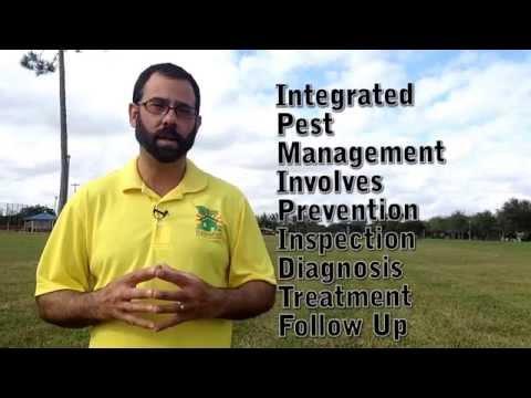 St Augustine Grass Care Fungus Control Miami 786-222-7069