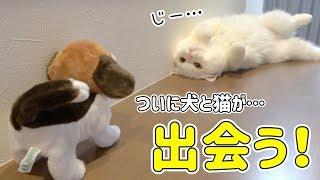 飼い猫が犬に会った時の反応が可愛すぎて悶絶レベルだった…!