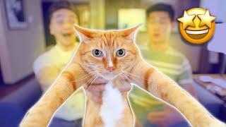 17 Signs You're a CAT Parent | Smile Squad