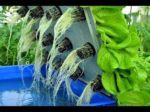 WOW! Amazing Agriculture Technology: Hydroponic Farming In Israel ❤