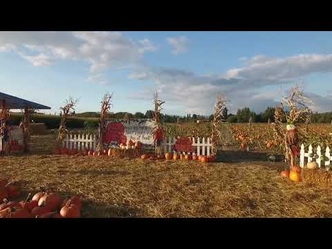 Frazier/Etrikin Farms Pumpkin Patch and Corn Maze