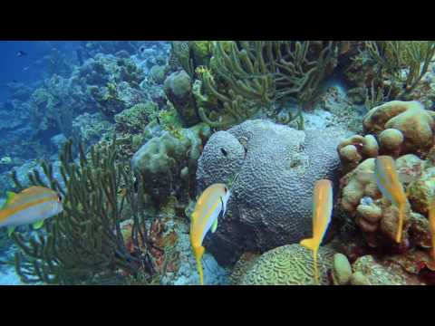 Best of Bonaire Diving/Flying - 4K with 432hz tuned ocean soundtracks