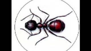 Laulu Moskovan muurahaisesta