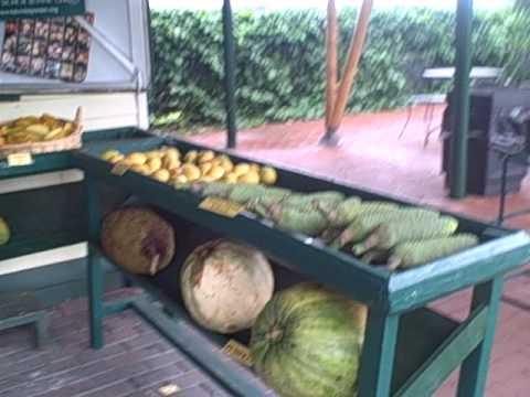 The Fruit Market at Fairchild Farm in Homestead Florida